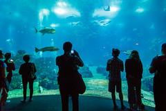 Lisbon Oceanarium - Portugal (MFMarcelo) Tags: lisboa portugal oceanarium water indoor oceanario nature blue people canon eos 5d 24105 lisbon