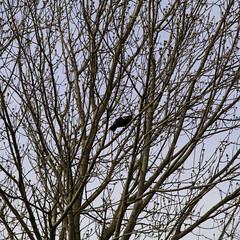 """Oh it's the kind of bird that yells at me"" (aerojad) Tags: milwaukee vacation travel wanderlust bird birds fauna wisconsin tree trees nature"
