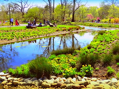 Water Garden's Pond Reflection (dimaruss34) Tags: newyork brooklyn dmitriyfomenko image sky clouds spring brooklynbotanicgarden flowers reflection