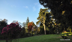 Early morning Kilmacurragh. (mcgrath.dominic) Tags: rhododendrons botanicgardens kilmacurragh cowicklow