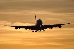 [07:02] EK0007 DXB-LHR (A380spotter) Tags: approach landing arrival finals shortfinals silhouette airbus a380 800 msn0112 30 thirty 30th thirtieth a6eee 38m longrangeconfiguration 14f76j427y الإمارات emiratesairline uae ek ek0007 dxblhr runway27r 27r london heathrow egll lhr