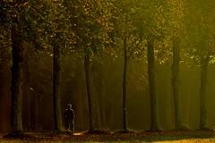 Him (Marie.L.Manzor) Tags: candid nikon nikon610 marielmanzor nature landscape light sunrise sun fall gettyimagecollection geotagged sunset colorfulsunset atmosphere dramaticskyclouds backlight countryside travel france versailles chateaudeversailles parcdeversailles httpswwwfacebookcommarielmanzor landscapelightsun trees sunrisebacklight mist fog brouillard brume sunrisesun backlightlight tree europe europa natural sky wow brilliant 1000favs 1000favorites