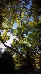 Les arbres de Micaud (Stphane Gavoye) Tags: france arbre franchecomt lieux besanon parcmicaud lumia930