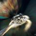 Fast Turtle, Pompano, Florida_.jpg