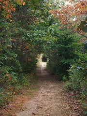 Wandering through Bonneyville Mill Park... (tquist24) Tags: autumn trees tree fall geotagged nikon bonneyvillemillcountypark nikoncoolpixaw100
