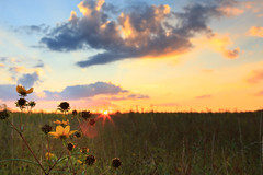 Peaceful Sunset (johnnyb053) Tags: blue sunset sky orange green yellow clouds canon newjersey nj meadow peaceful calm mercer orangesky wildflowers mercercounty 6d ef2470f28l canon6d countyparks mercermeadows