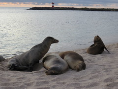 Galapagos - San Cristobal-241