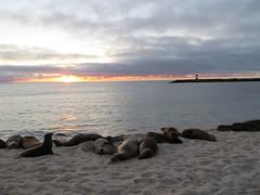 Galapagos - San Cristobal-235
