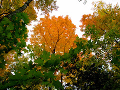 """Green & Orange Leaves mingle • <a style=""""font-size:0.8em;"""" href=""""http://www.flickr.com/photos/34843984@N07/15236872909/"""" target=""""_blank"""">View on Flickr</a>"""