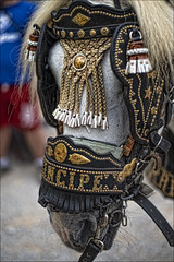Principe (Concurso de Tiro y Arrastre) (Salvador Ruiz Gómez) Tags: españa valencia fauna caballos deporte comunidadvalenciana tradicionesvalencianas