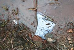 St-Calixte Dreaming - VI ( CHRISTIAN ) Tags: nature rock 50mm nikon stream pierre f14 oil huile stcalixte ruisseau lanaudire