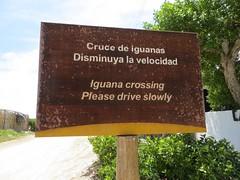 Galápagos - Isabela-59