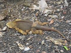 Galápagos - Santa Cruz-25