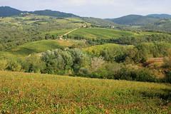 IMG_3101 (fotografia per passione) Tags: italy canon italia tuscany chianti siena toscana toscane raddainchianti canoniani marksoetebier markchristiansoetebier canonianiitaliani