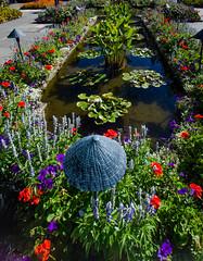_14L7963 (5816OL) Tags: flowers dad vancouverisland vacations westcoast2014