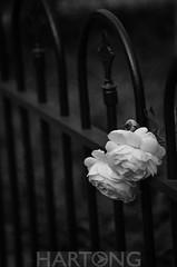 wwpw2014-hartong-0533-2 (HartongDigitalMedia) Tags: usa ky covington covingtonkentucky hartongdigitalmedia wwpw2014 hartongwwpw2014 historiccovington