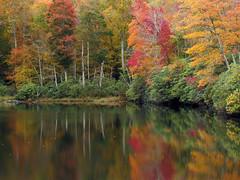 Sims Pond Reflections (BlueRidgeKitties) Tags: landscape northcarolina blueridgeparkway westernnorthcarolina southernappalachians simspondoverlook canonpowershotsx40hs