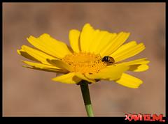 insecto-97_2 (Xavi GM) Tags: meg macrophotography macrofotografia xavigm