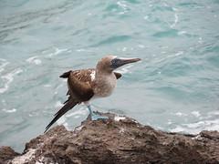 Galapagos - San Cristobal-161