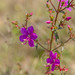 Flora do pantanal