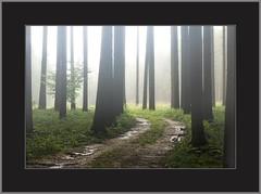Wandern im Regen ( Hiking in the rain) (alfred.hausberger) Tags: bad wald wandern birnbach rottal regenstimmung kraftorte lugenz