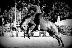Reno Freire Villagran (Eduardo Amorim) Tags: horses horse southamerica criollo caballo uruguay cheval caballos cavalos prado montevideo pferde cavalli cavallo gauchos pferd chevaux gaucho  amricadosul beijos montevidu uruguai gacho amriquedusud  gachos  suramrica amricadelsur sdamerika crioulo caballoscriollos criollos jineteada  americadelsud gineteada crioulos cavalocrioulo americameridionale caballocriollo campeiros campeiro eduardoamorim cavaloscrioulos pasomolinosudamrica