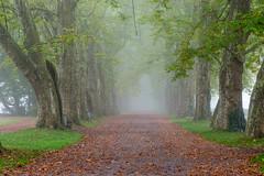 Platanenallee (stefanheymann) Tags: fog nebel sigma 105 d800 tbingen platanenallee