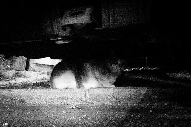 Today's Cat@2014-10-04