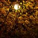 Autumn colored streetlight