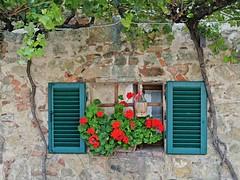 Tuscany - a classic shot (Catwards - it's a struggle keeping up) Tags: italy flower window nikon wine vine tuscany shutters chianti j1 redflower