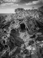 boolcoomatta sept 2014 - 9291295 - wiperaminga (liam.jon_d) Tags: abhf mono arty australia australian australianbushheritagefund bw bha billdoyle blackandwhite blackandwhitephotojournalism boolcoomatta boolcoomattareserve bushheritage bushheritageaustralia conservation conservationreserve desert eremophilaloop landscape monochrome nocolour outback outbacklandscape photojournalism sa semiarid southaustralia southaustralian westernloop wiperaminga wiperamingahill withoutcolour 100 most recent interesting 100mostrecentmostinteresting 100mostinterestingblackandwhite mrmijan14 mostintblackwhiteimset popularimset pickmeset