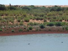Boolcoomatta day 2 - Good Weather for Ducks (Light's_[di]vision) Tags: heritage bush phil south reserve australia ranges olary bagust boolcoomatta
