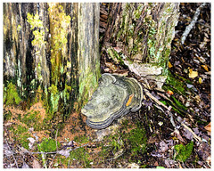 A Place Where Nothing Ever Happens (swanksalot) Tags: ontario tree mushroom forest moss blogthis southriver frostpocket townshipofmachar