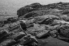 on top of Gull Rock, looking southeast, Monhegan, Maine, Nikon D40, Vivitar 28mm f-2.8, 10.6.14 (steve aimone) Tags: ocean sea sunlight monochrome blackwhite rocks maine monochromatic puddles monhegan grays monheganisland gullrock primelens tonality vivitar28mmf28 nikond40 nikonprime