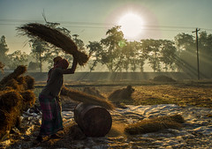 Morning Work (Topu Saha) Tags: professionalpeople people hardwork street field morning winter wintermorning sarishabari jamalpur bangladesh sunray ray rays sunrise