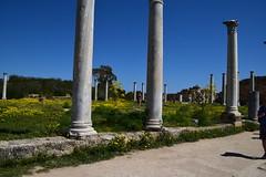 DSC_0256 (mark.greefhorst) Tags: cyprus northerncyprus salamis ancientworld roman