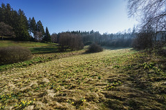 20170409_bieley_0033.jpg (elmayimbe) Tags: schwalmbachtal monschau deutschland landschaft europa narzisse eifel pflanzen kalterherberg blumen perlenbachtal