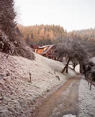 Mühlviertel (nikolaijan) Tags: plaubelmakina 67 plaubel kodak portra800 120 film austria muehlviertel oberoesterreich