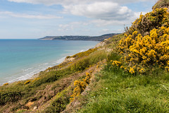 Cain's Folly and Lyme Bay (Keith in Exeter) Tags: landslide landslip cliff erosion cainsfolly stonebarrow charmouth lymebay sea coast bay gorse yellow lymeregis dorset england water landscape outdoor