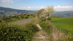 Basilicata (maramillo) Tags: maramillo italy scape path pfad