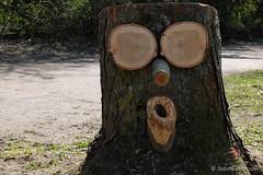 Lost Tree (Sockenhummel) Tags: fuji x30 fujifilm finepix fujix30 baumgesicht stadtparksteglitz baumstamm gefällt baumstumpf face gesicht park garten berlin