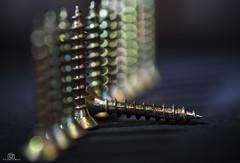 """""""Made Of Metal""""    Macro Monday (CamraMan.) Tags: macromondays macromonday screws pozi madeofmetal canon6d tamron90mm ©camraman mm hmm shadows light metal bokeh row line macro"""