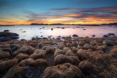 Field of Trumps :) (Bent Velling) Tags: larkollen moss rygge østfold norge norway norwegen landskap solnedgang landscape seascape waterscape sunset clouds water rocks grass outdoor nature hdr longexposure hitechformatfirecrest 10stop sonya7r fe1635mmf4 bentvelling