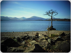Balmaha (Nicolas Valentin) Tags: balmaha tree scotland lomond loch landscape lochlomond light