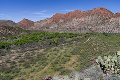 Anglų lietuvių žodynas. Žodis arizona sycamore reiškia Arizonos sycamore lietuviškai.