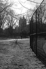 WHAT THE HELL GORSUCH? (a.cadore) Tags: fujifilm fujifilmxt1 nyc newyorkcity xf35mmf2rwr xt1 eldorado notthesanremo uptown centralpark landscape candid blackandwhite bw hff