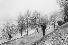 winter makes a comeback with late April snow (krøllx) Tags: bw nikc blackandwhite midtnorge midtbyen monochrome norway people snow street streetphotography trondheim umbrella weather 20170421dsc09569edit201704211 seasons