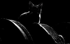Reaccions (carlosdeteis.foto) Tags: carlosdeteis galiza galicia cats gatos jatos