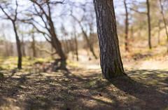 Pine (Edd Noble) Tags: bokeh bokehpanorama brenizermethod bokehrama canonfd85mmf12 sonya7 göteborg gothenburg sweden scandinavia