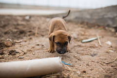 puppy (dominic_wenger) Tags: greece sindos thessaloniki athen frakapor refugee refugees refugeecamp camp military crysis borders open world problem swisscross volunter help portrait face family poor man woman kids chil child children beautiful beauty war syria tent tents hall light dark cold candid looking people human humanity sun boring life flee volunteer frame sigma35 sigma canon 5dmk3 lowlight sigmaart humanism dog animal puppy mud dirt sniff cute baby young karamanlis walk